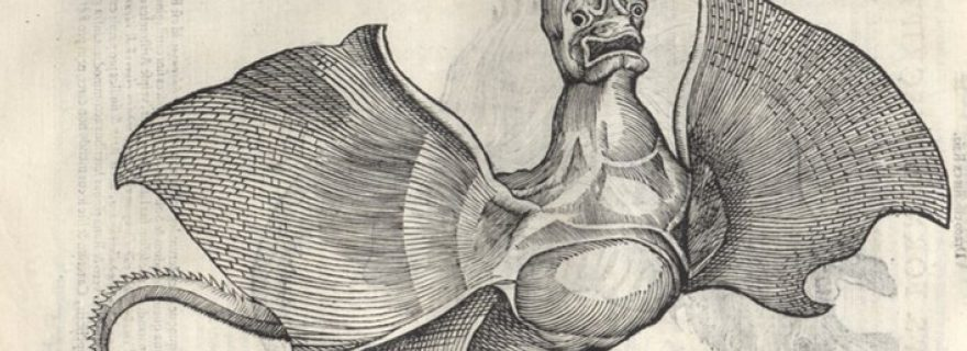 Monstrous rays and fraudulent apothecaries